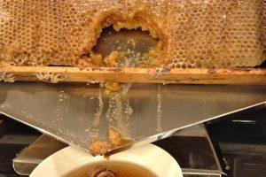 7 Sweet Reasons Why I Love Honey